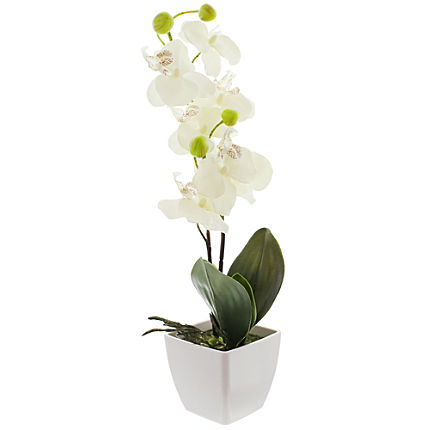 Zoom: Orchidee
