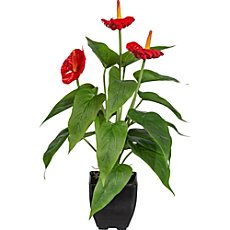 artificial anthurium