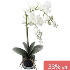 artifical orchid
