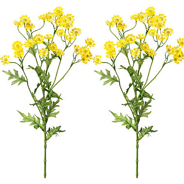 camomile 2-pack